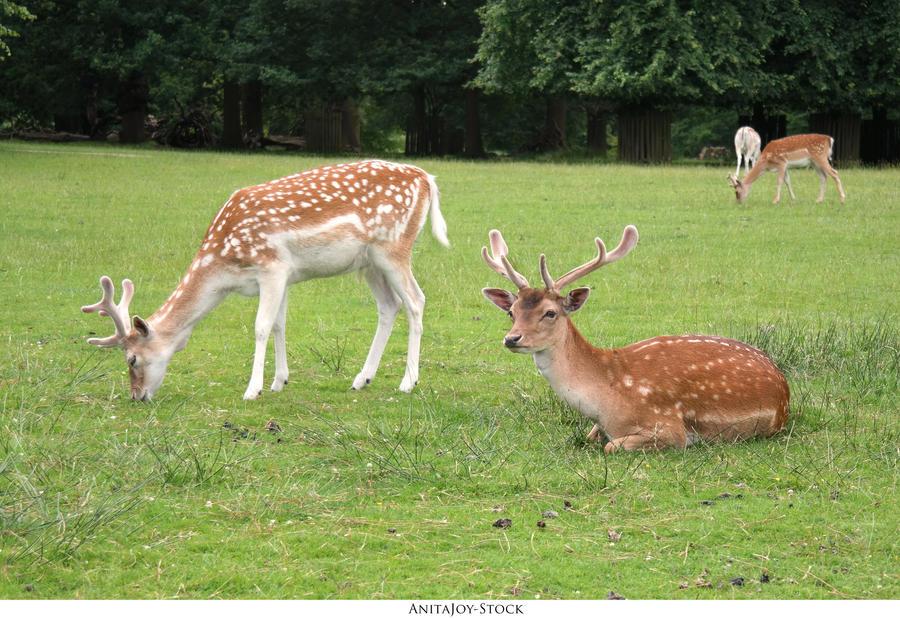 Oh Deer 06 by AnitaJoy-Stock