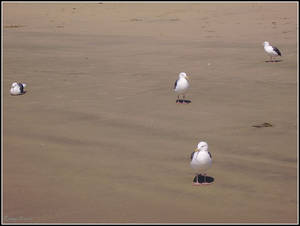 All in Gull fun