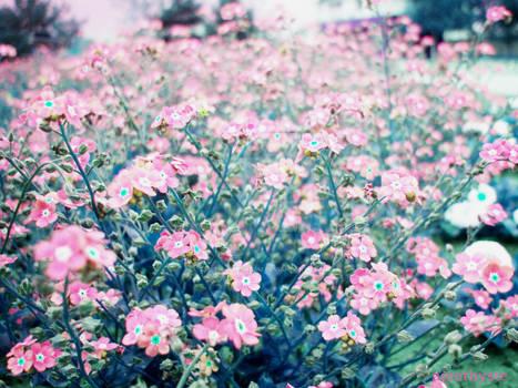 Field of paper flowers