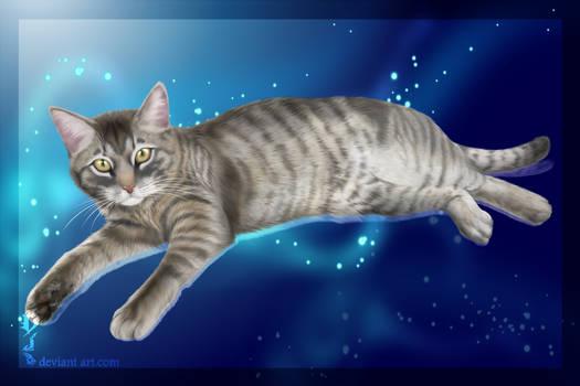 cat. commission
