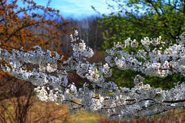 Flowering Trees by Celem