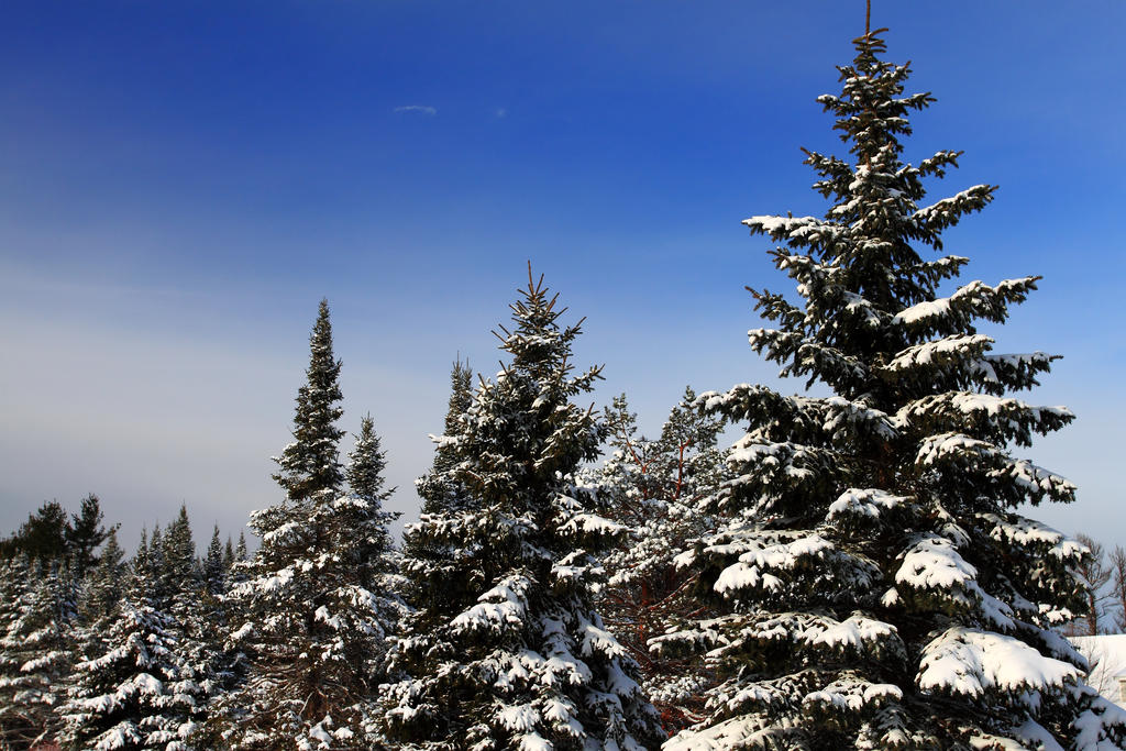 Snowpines by Celem
