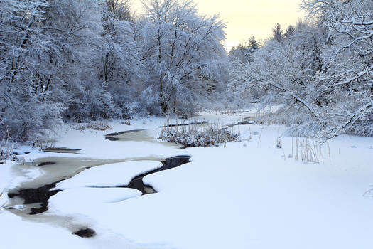 Stock Winter Stream