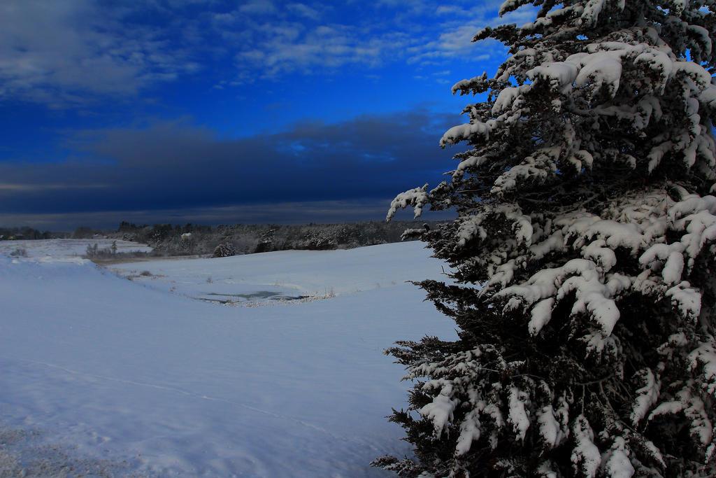 Stock Winter Tree by Celem