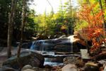 Autumn Forest Falls