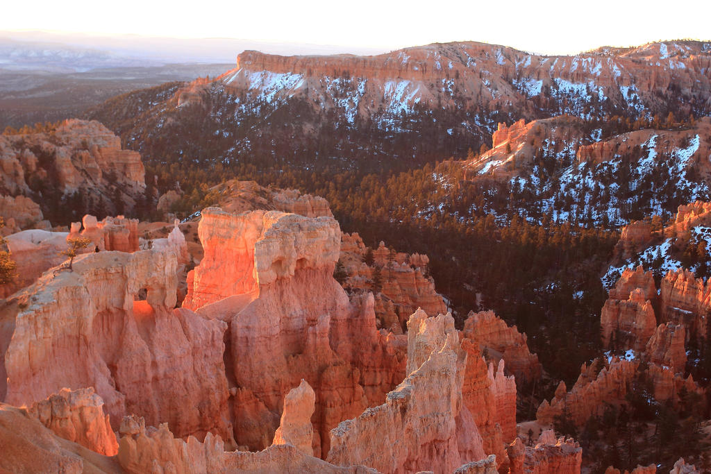 Pink Morning at Bryce Canyon by Celem