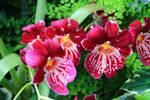 Stock: Flower Friday