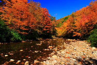 Stock: Mountain River in Autumn