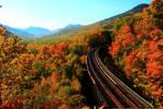 Stock: Railway through the Trees