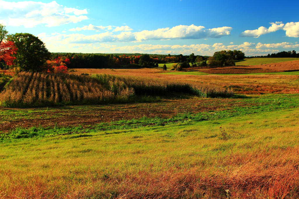Stock: Autumn Fields in Stratham by Celem