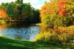 Stock: Duck Pond