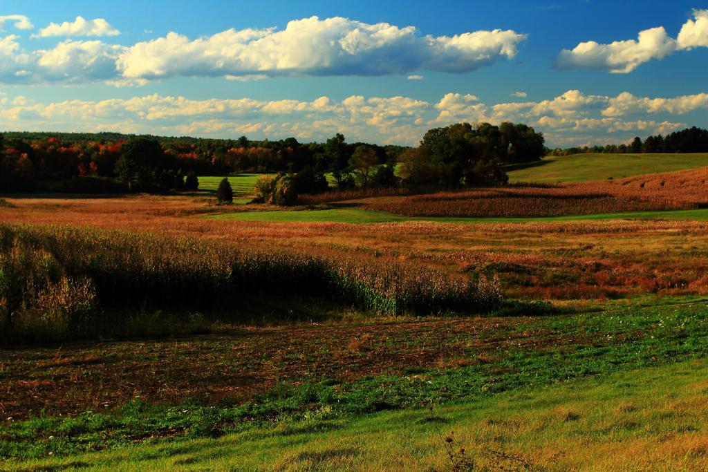 Stock: Rolling Hills Farmland by Celem