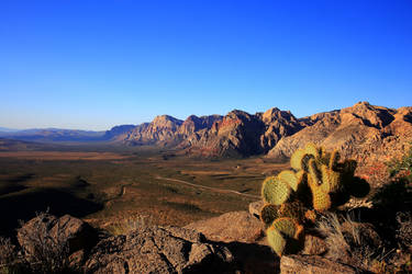 Stock: Cactus Overlook