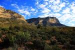 Stock: The Green Desert by Celem