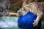 Stock: Tiger Watersports
