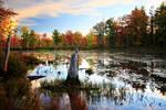 Stock: Autumn Swamp