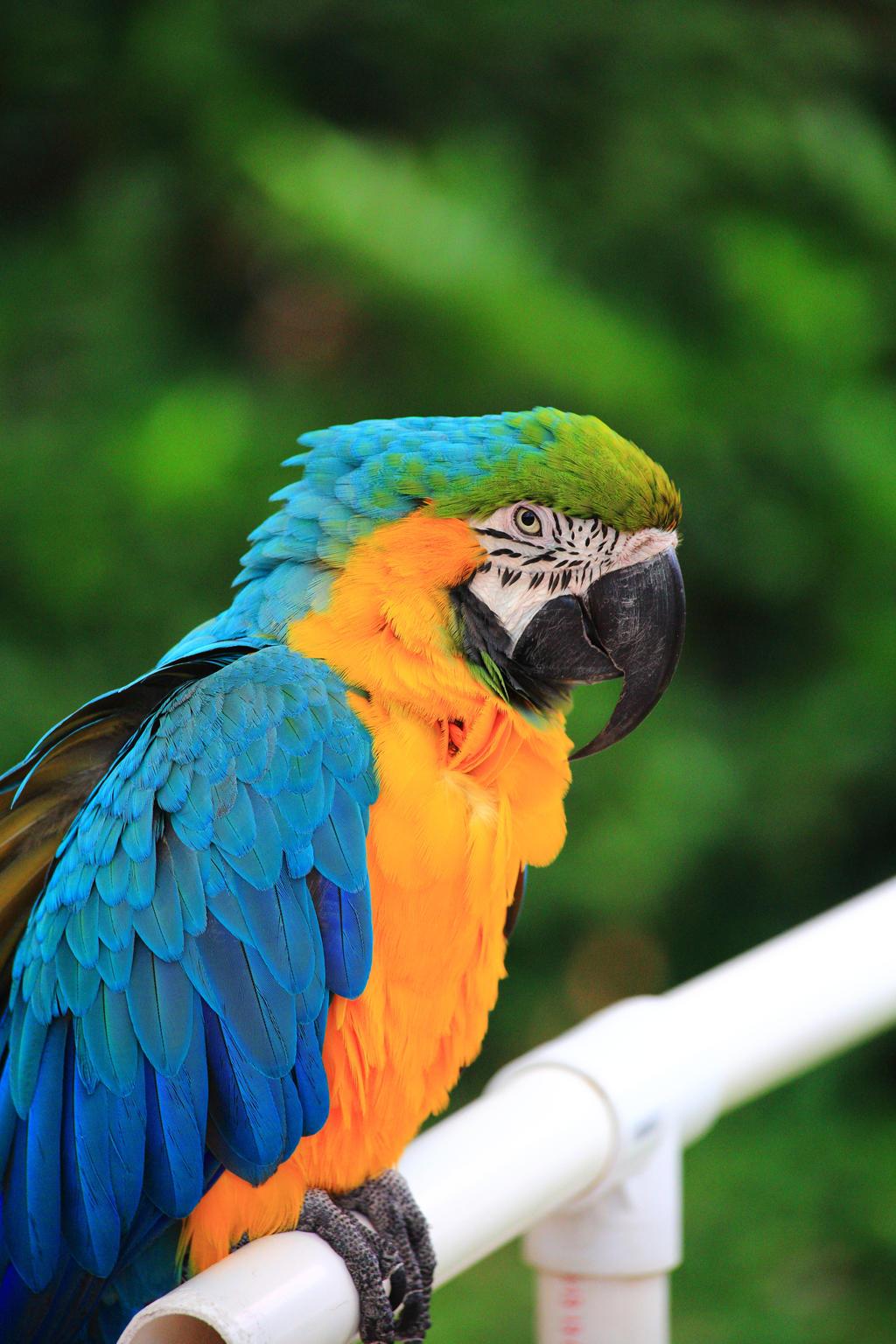 Stock: Bright Bird by Celem