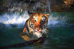 Stock: Tiger Watersports- The Stick