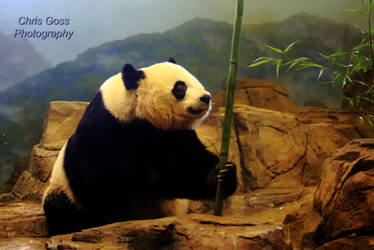 Stock: Kung Fu Panda by Celem