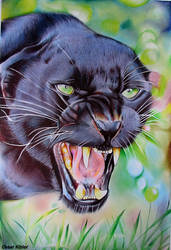 Angry Panther- Ballpoint pen on paper