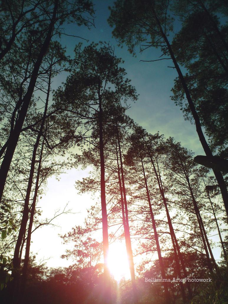 Morning Jungle by okinawarikenata