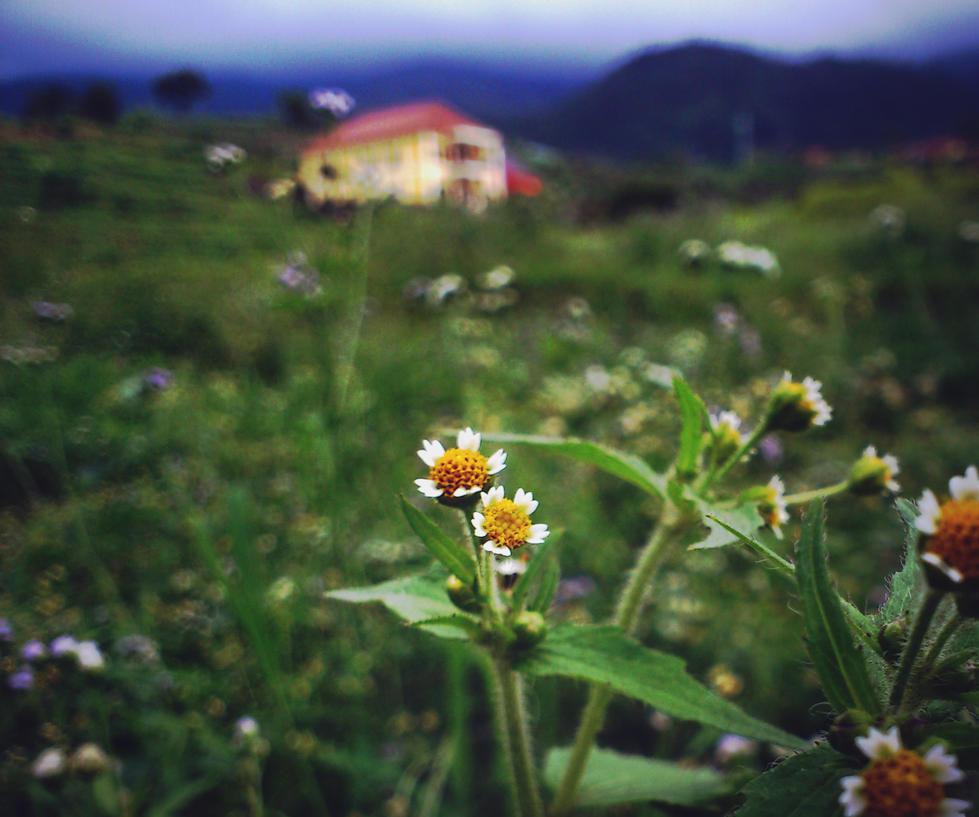 Wild Flower by okinawarikenata