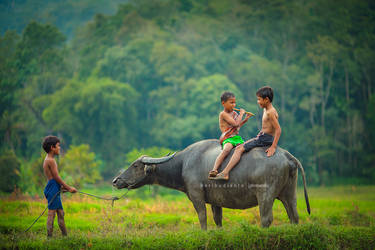 flute with buffalo by heribudianto