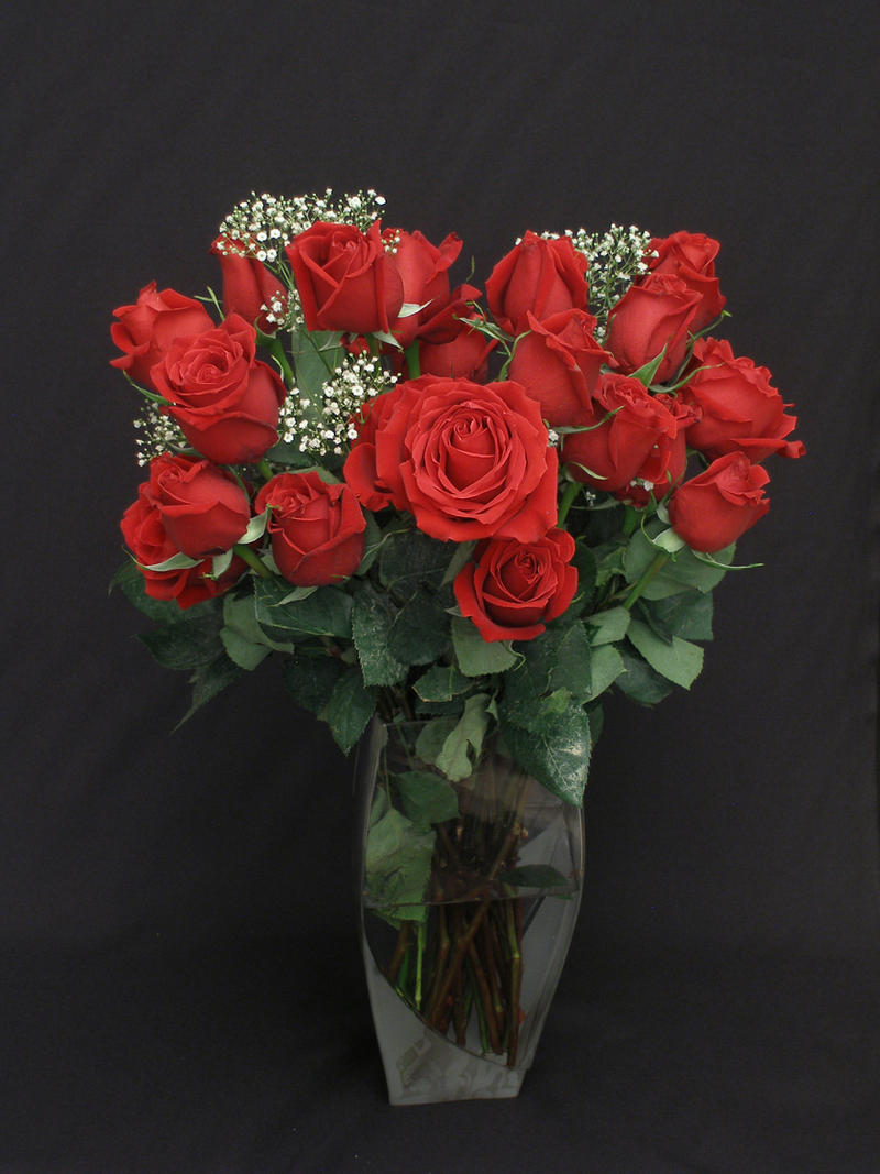Stock roses 1 by AmbiePetals-Stock