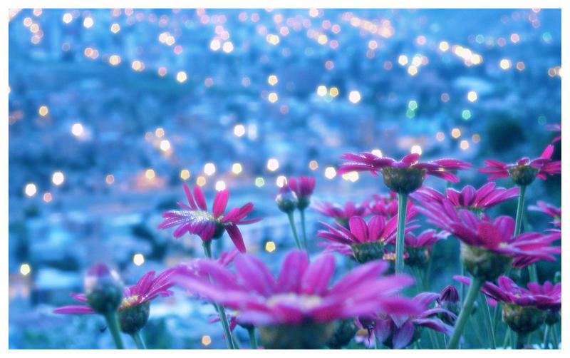 Flower bokeh v 2 by zentenophotography - Bahar k Khubsurat Rang