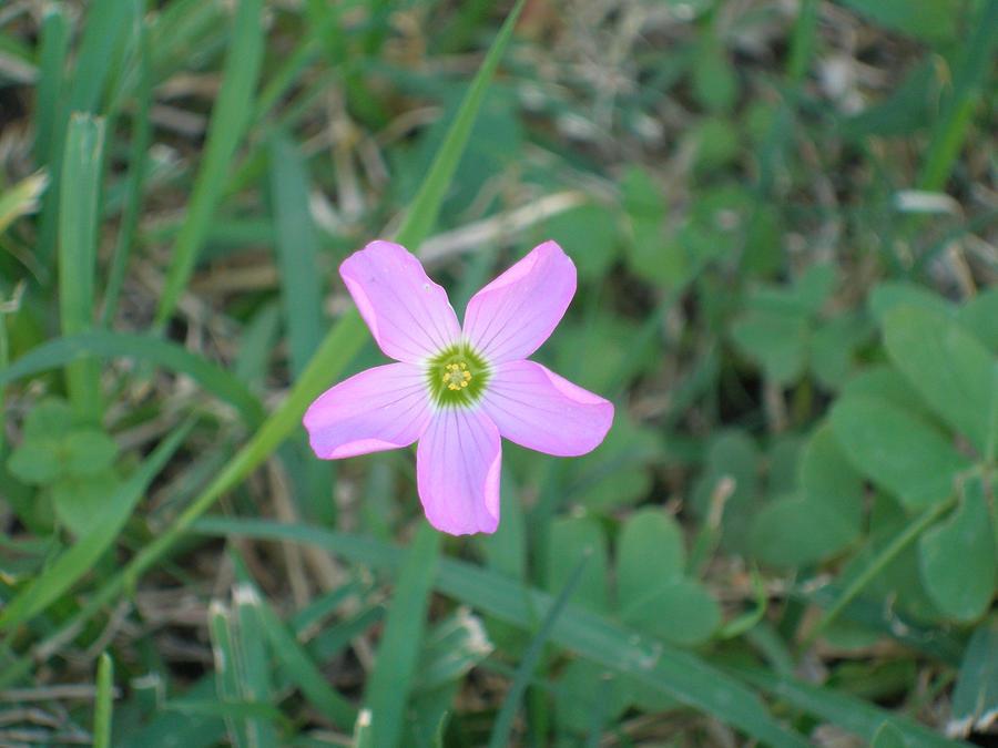 Wild Flower by kristhasirah