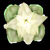 Little Flower by kristhasirah