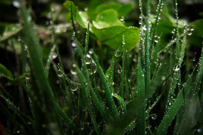 grass+CS5 by Furious--Angel