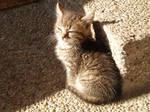 Kitten on sun