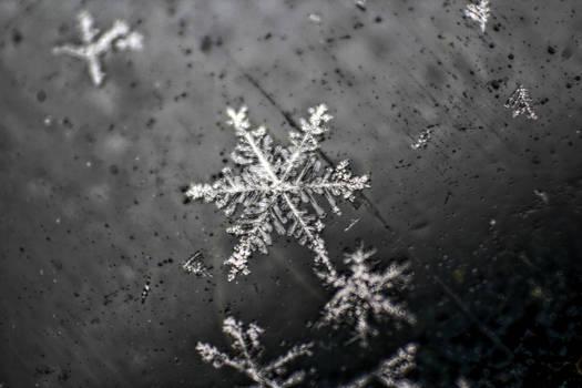 HDR Macro Snowflake
