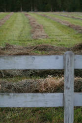 Hay there by NickHernandez