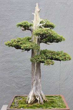 Tree Stock #1