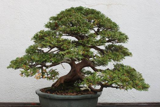 Tree Stock #10