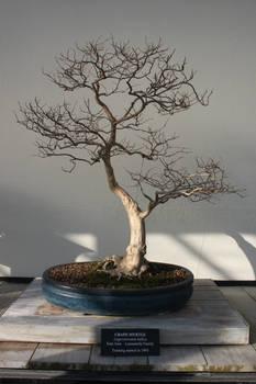 Tree Stock #16