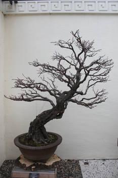 Tree Stock #36