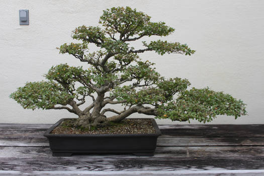 Tree Stock #37