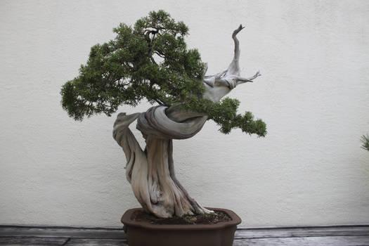 Tree Stock #44
