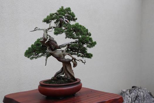 Tree Stock #68