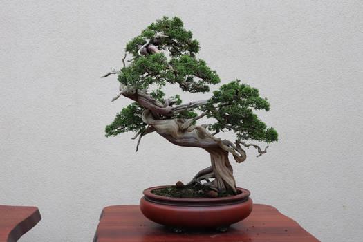Tree Stock #69