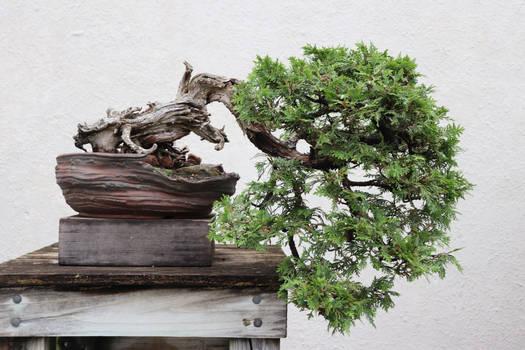 Tree Stock #73