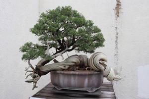Tree Stock #76