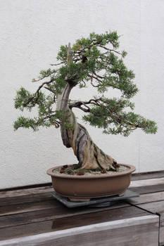 Tree Stock #79