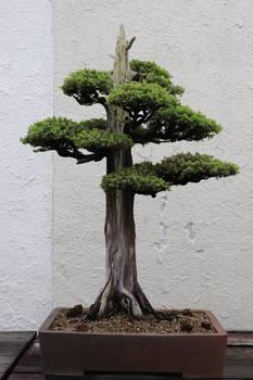 Tree Stock #84