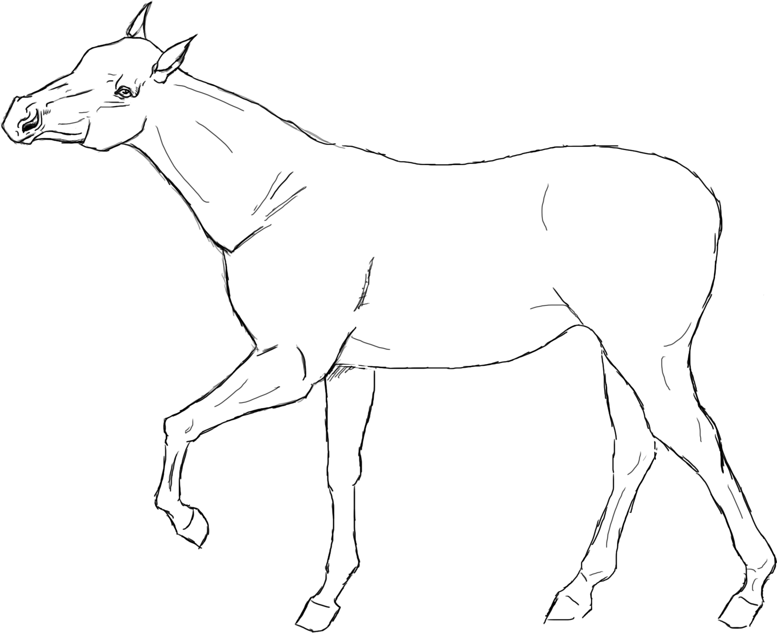 Horse Lineart : Horse lineart by yaku on deviantart