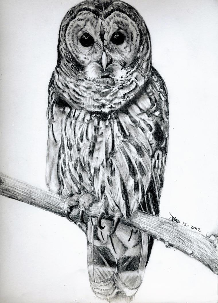 [Commission] Owl by StrawberryIchigo15