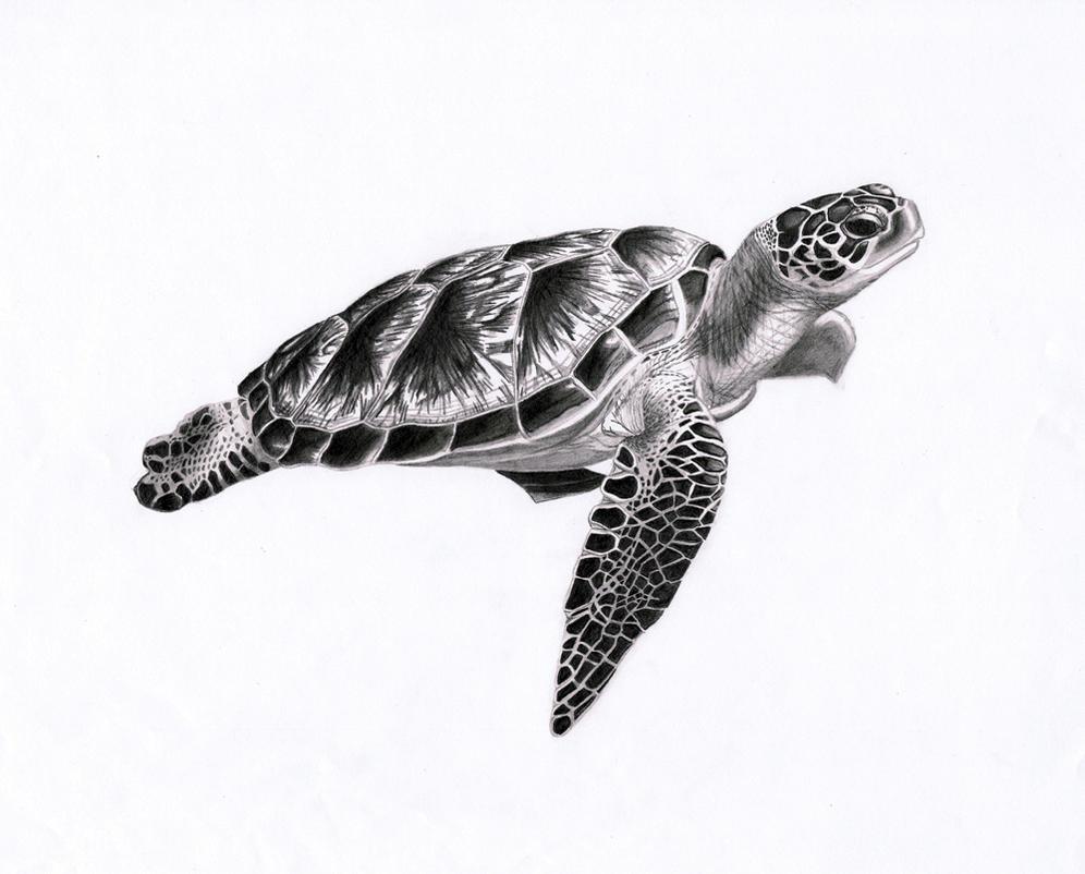 Turtle Line Drawing Tattoo : Sea turtle by punkymeadows on deviantart
